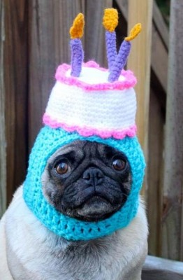 pug-in-birthday-hat