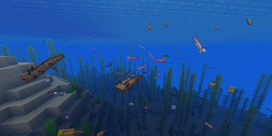 axolote na água